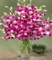 Exotic Orchids Gifts toBrigade Road, flowers to Brigade Road same day delivery