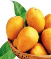 Premium Alphonso Mangoes 24pcs Gifts toBenson Town, fresh fruit to Benson Town same day delivery