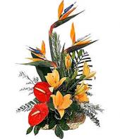 Tropical Arrangement Gifts toAgram, flowers to Agram same day delivery