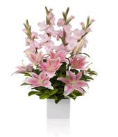 Blushing Beauty Gifts toDomlur, flowers to Domlur same day delivery