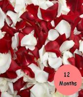 12 months of flowers Gifts toIndia, flower every month to India same day delivery