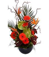 Spring Fusion Gifts toOjhar, Flowers to Ojhar same day delivery