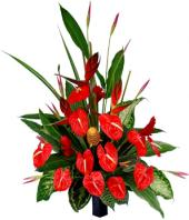 Beauty in Red Gifts toRT Nagar, flowers to RT Nagar same day delivery