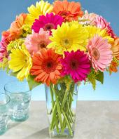 Colourful Surpriser Gifts toPort Blair, sparsh flowers to Port Blair same day delivery