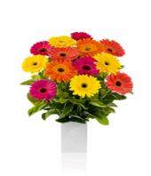 Cherry Day Gifts toHBR Layout, flowers to HBR Layout same day delivery