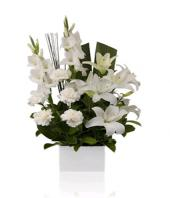 Casablanca Gifts toHyderabad, sparsh flowers to Hyderabad same day delivery